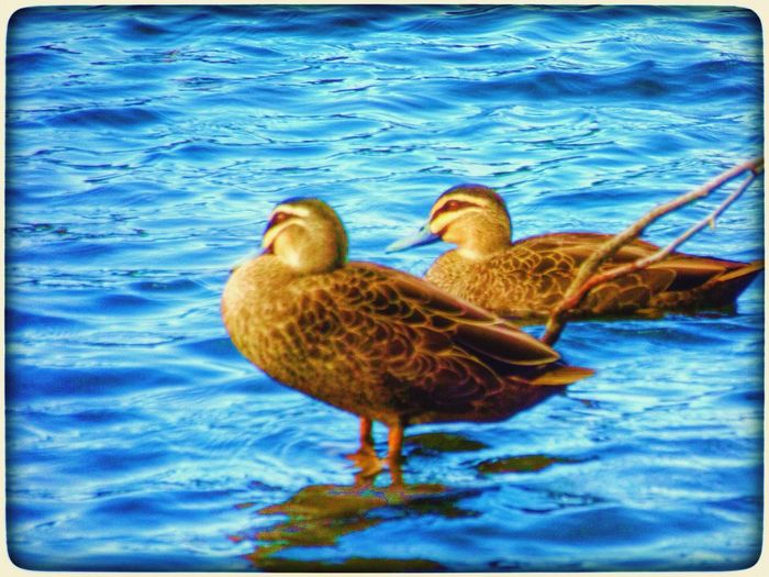Vintage 2 Filter Water Lake At The Park Ducks Birds