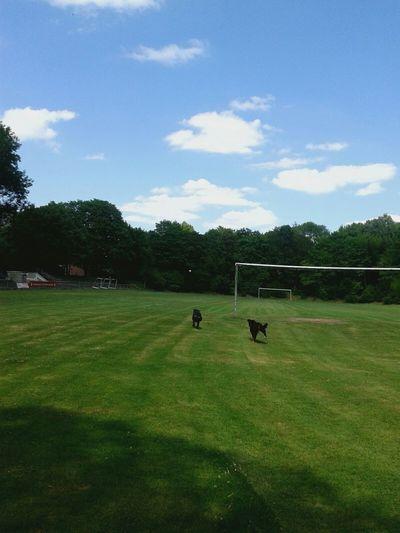 Ich Liebe Meinen Hund! Play With The Animals Hunderunde Dog❤ Sommer Sonne Sonnenschein :P Run Run Run Summer Views