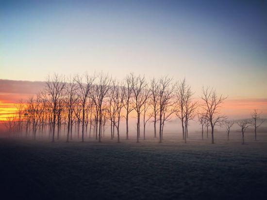Foggy Morning Fog Sunrise Sunrise_sunsets_aroundworld Sunrise_Collection EyeEm Best Shots - Sunsets + Sunrise Foggy Indiana