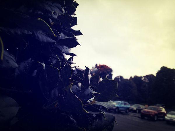 Morning Looks Like Mornings Morning Sky