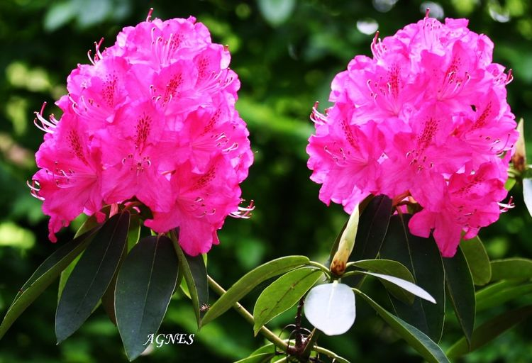 Floralperfection Eye Em Nature Lover Most Stunning Shot BeautyAndMadness