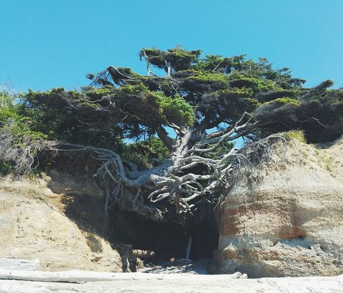 Day Textured  Outdoors No People Nature Tree Sky Close-up Roots Tree Roots  Cave Beach PNW Summers EyeEm Selects