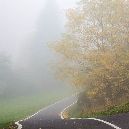 Foggy autumn morning in a rural setting. Autumn Beauty In Nature Day Fog Grass Nature No People Road Scenics The Way Forward Tranquil Scene Tranquility Tree Winding Road