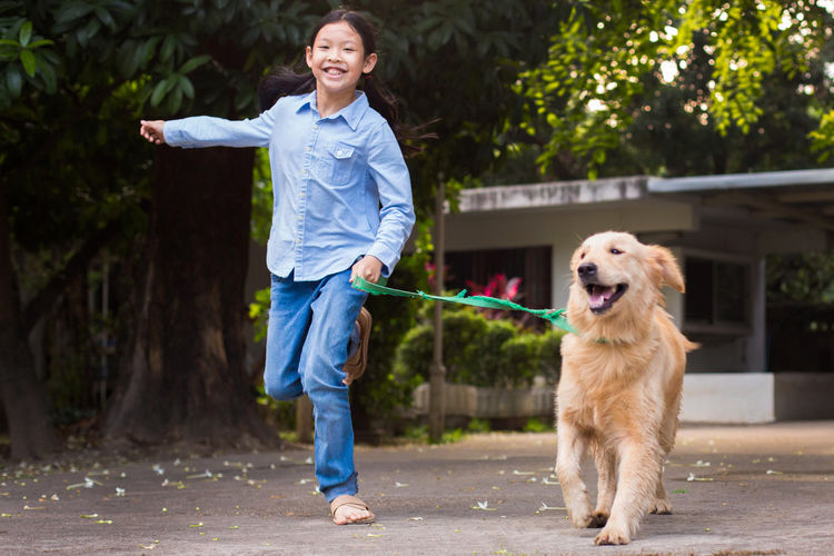 Adult Adults Only Animal Animal Themes Asian Girl Cheerful Day Dog Domestic Animals Friendship Girl Golden Retriever Golden Retriever Goldenretriever One Animal One Person Outdoors People Pets Puppy Retriever Running Smiling Vet  Walking