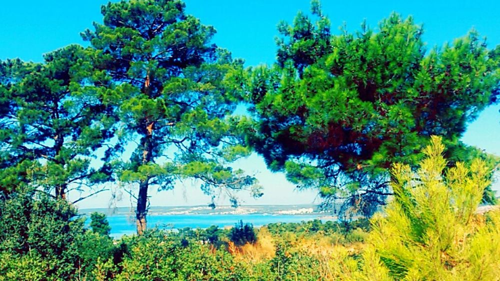 I Love greeeeennnn ♡.♡ i love colors .. Relaxing Hello World Taking Photos Sealovers Sea Sea Life Sunshine Natural Beauty Have A Nice Day♥ Enjoying Life Tree_collection  EyeEm Gallery Nopeople EyeEm Team Eyeem Turkey Didyma Turkey Eyeem Market Hi! Everybody Sun Green Green Green!  Green Color Green Nature Greenlife