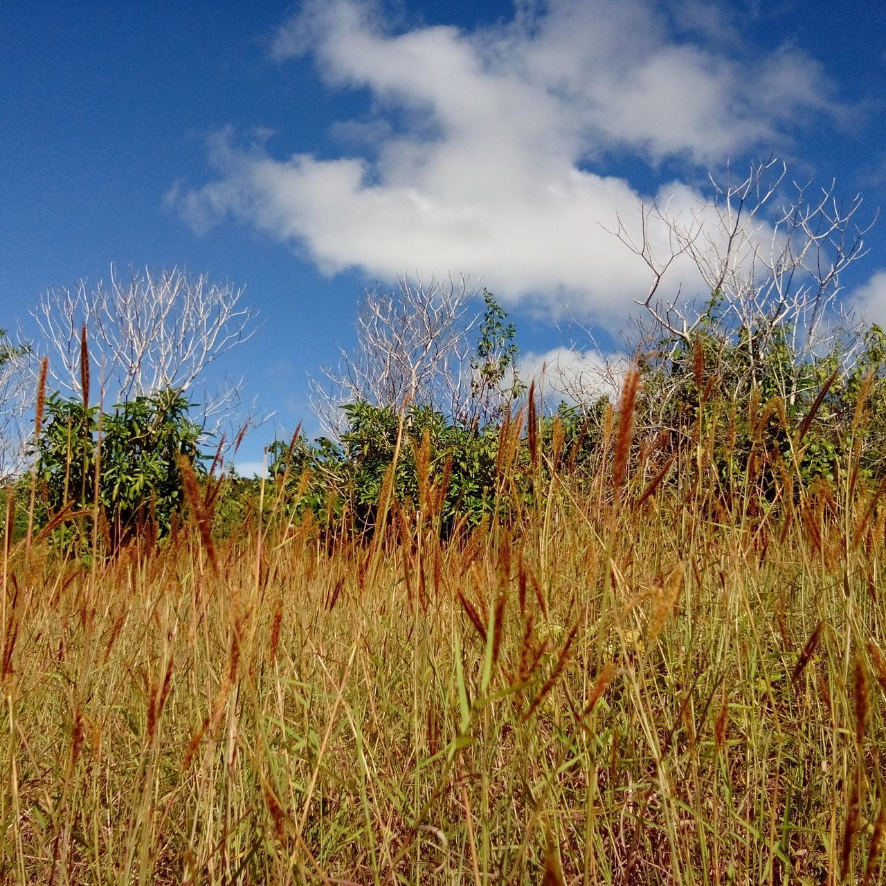 growth, nature, field, sky, plant, tranquility, beauty in nature, tranquil scene, landscape, outdoors, no people, grass, day