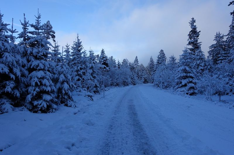Winter Wonderland Forest Trees Snow Covered Winterwonderland Snowcovered Winter Cold Temperature Snow Winter Nature Weather The Way Forward Beauty In Nature Tranquil Scene Tree Scenics Tranquility No People Sky Landscape Road Outdoors Transportation Day Shades Of Winter