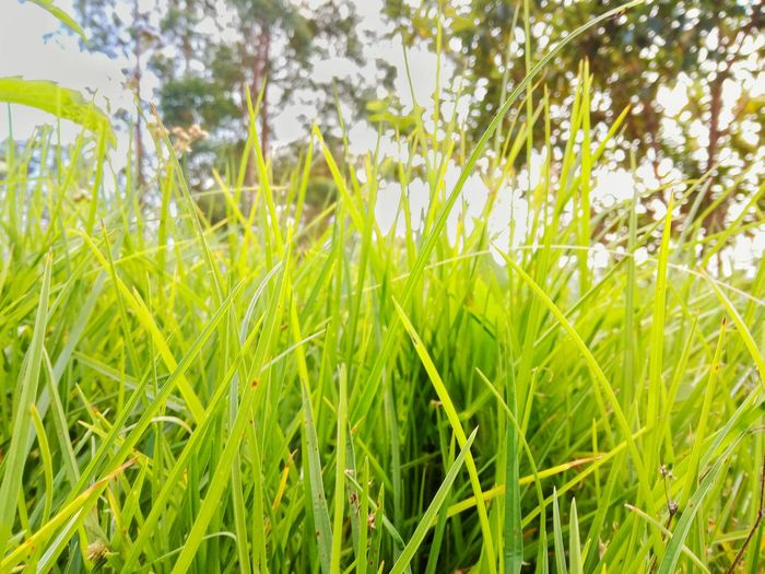 Close-up of fresh green plants in field