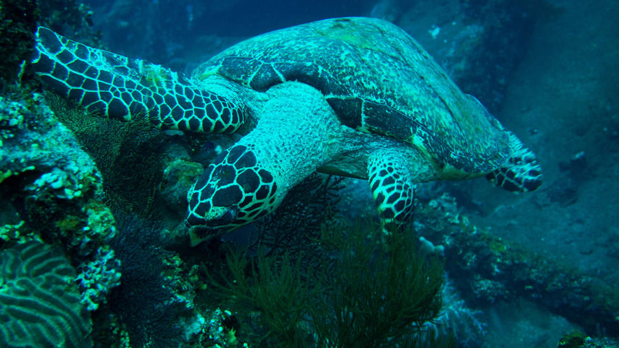 Close-up of turtle swimming over coral in ocean