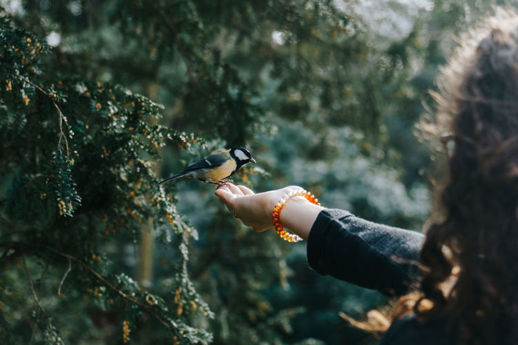 Woman Feeding Great Tit On Hand
