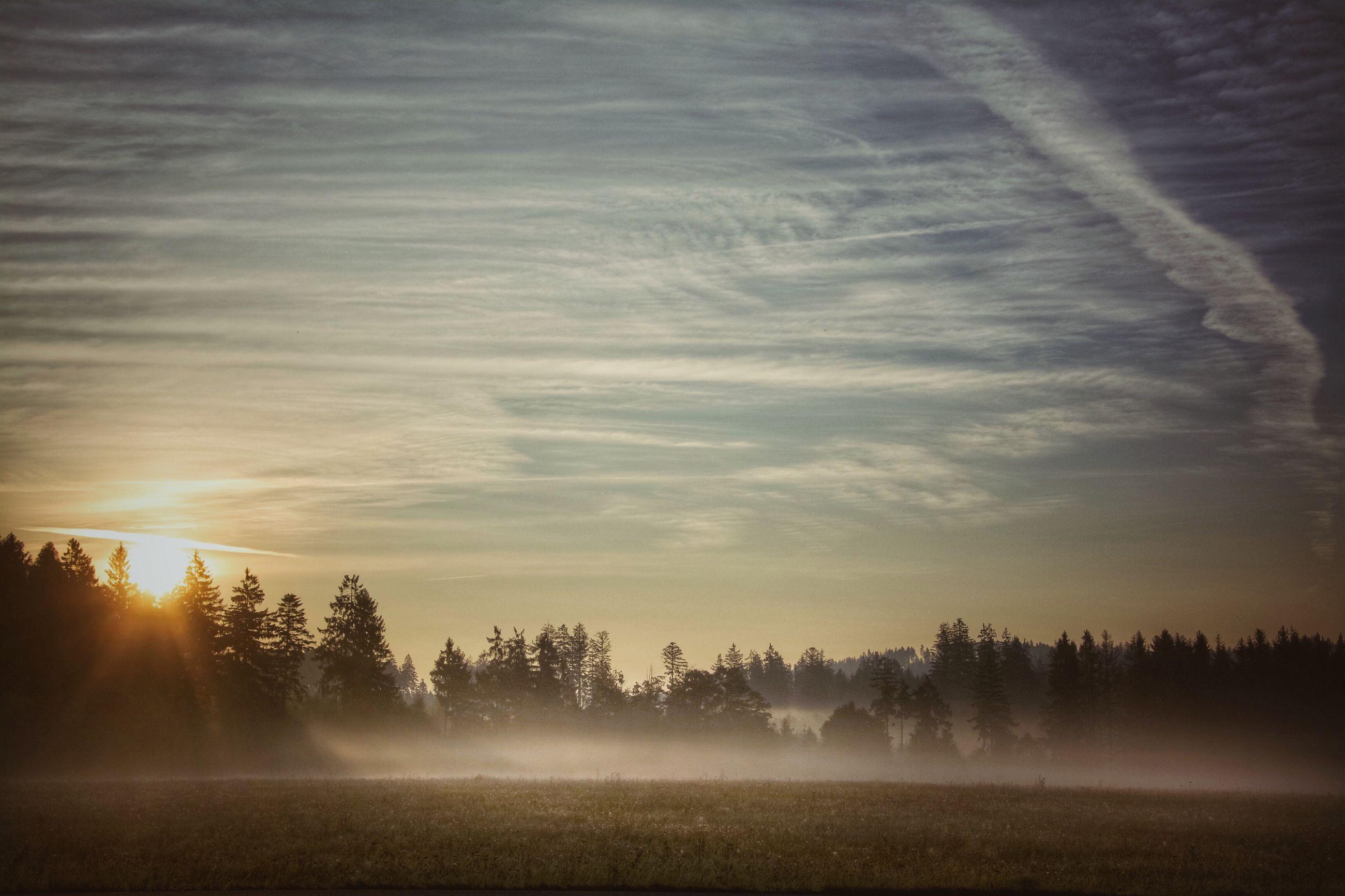 tree, tranquil scene, landscape, scenics, tranquility, sunset, silhouette, sky, nature, beauty in nature, sun, fog, cloud - sky, field, sunbeam, outdoors, non-urban scene, sunrise - dawn, rural scene, back lit, distant, solitude, mist, foggy, no people