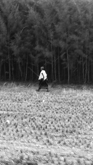 Blackandwhite Farmer Farm Tree Black White Fineart People Peoples Village Countryside Tree Men Full Length Walking Field Hiker Plough Grassland Agricultural Field Cultivated Land Farmland Crop  Plowed Field Farm Worker Rice Paddy Organic Farm Combine Harvester