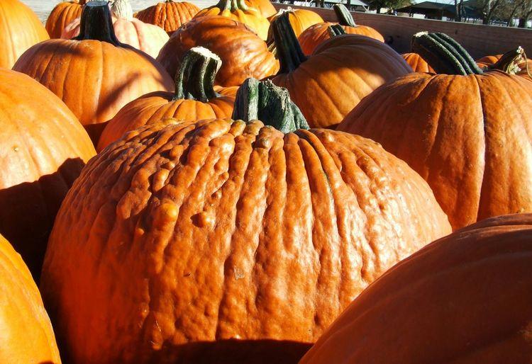 Pumpkins Pumpkin Patch Autumn Colors Pumpkinpicking Fall Beauty The Beauty Of Fall