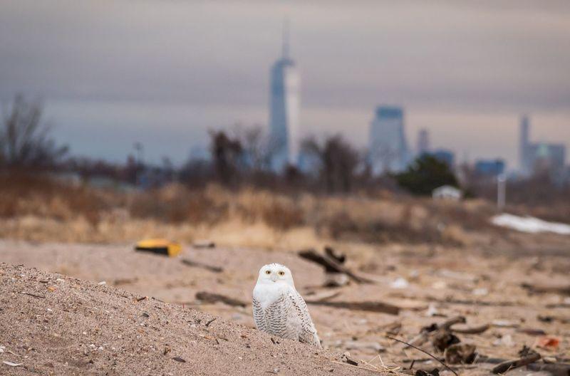 Bird on beach against sky