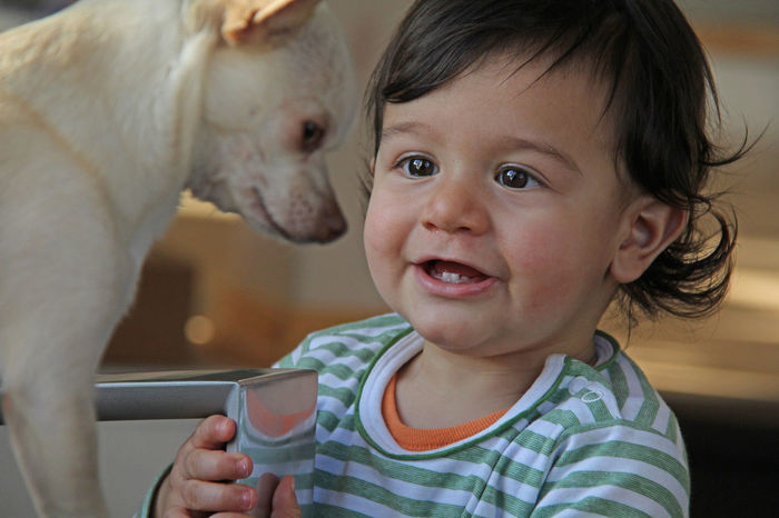 Chawawa Close-up Dog Domestic Animals Facinated Friendship Indoors  Kids And Animals  Kids And Dogs One Animal Pets