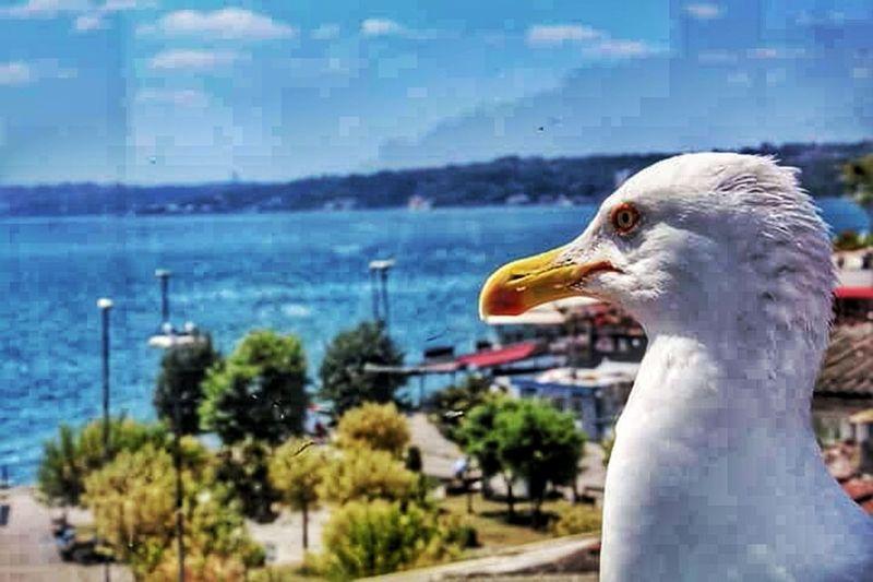 Sözlerini bilmem, gözlerin bana deniz kenarı.. Bird Beauty EyeEm Nature Lover Nature_collection Seagul Sea Turkeyphotooftheday