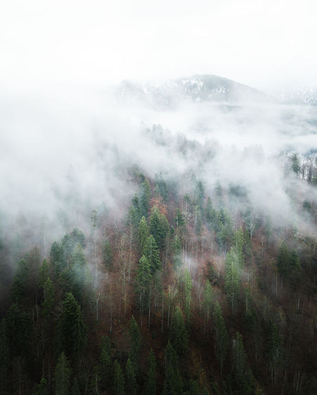 Moody forest captured with a drone. My Best Photo Fog Beauty In Nature Tranquil Scene Tranquility Scenics - Nature Day Environment Nature Land No People Mountain Non-urban Scene Sky Landscape Outdoors Hazy  Mood Forest Haze Tree Plant Growth WoodLand Smog