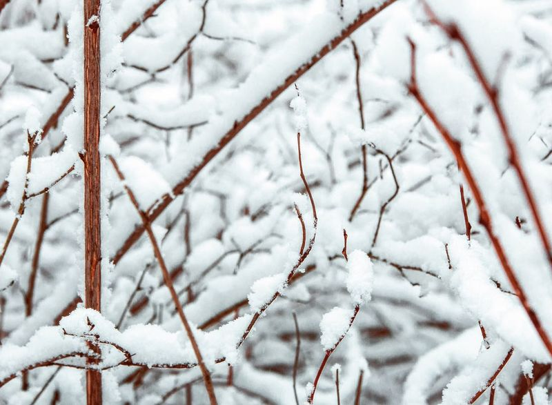 Winter Snow Cold Temperature Nature Weather White Color Beauty In Nature Frozen Twig Outdoors Close-up Frost No People Tree Branch Ice Day Tranquility Snowing