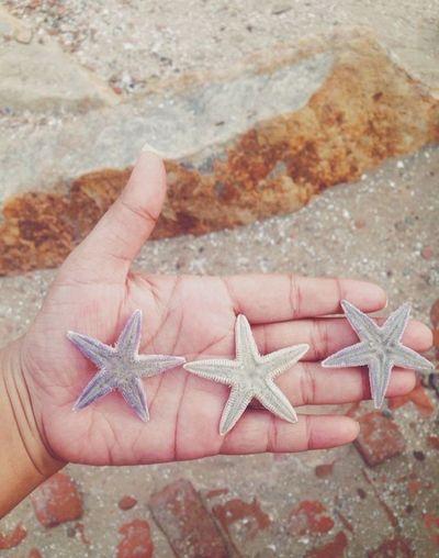 Coral By Motorola Starfish  Beautiful