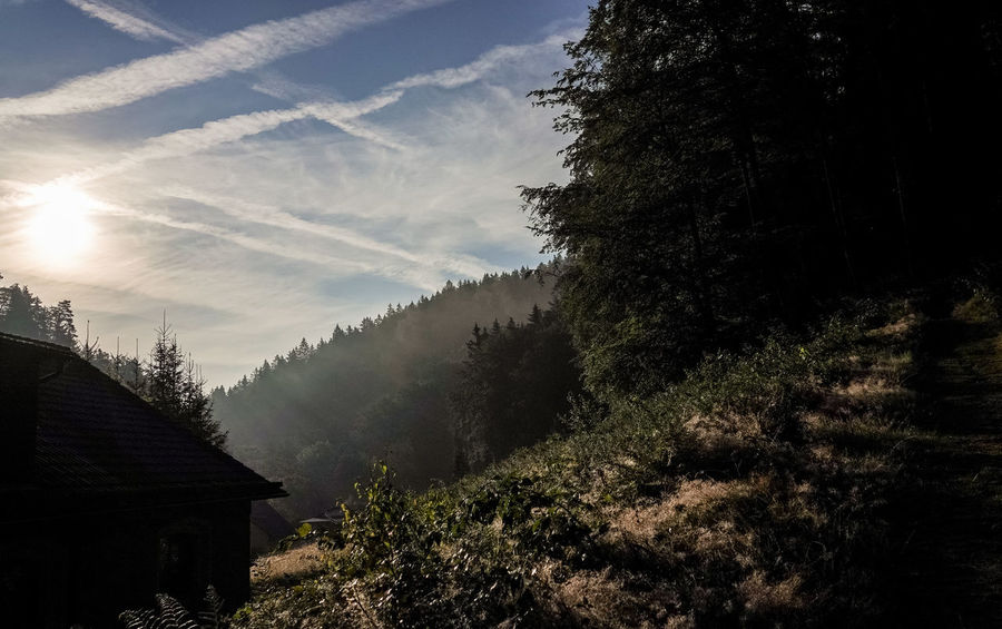Frühnebel🤗 Kirnitzschtal Sonnenaufgang🌇 Architecture Beauty In Nature Built Structure Cloud - Sky Day Environment Growth Land Landscape Nature No People Non-urban Scene Outdoors Pine Tree Plant Scenics - Nature Sky Sunlight Tranquil Scene Tranquility Tree