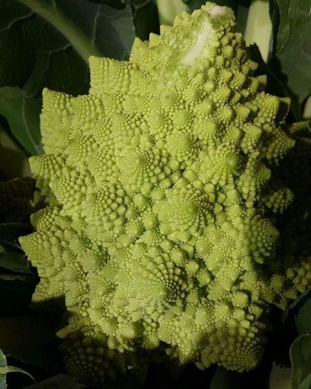 Nature Kalafior Mila Food Green Texture Zielony Zielona Co To  Jest Siemka Sklep Polska Ognisko Kupa Nudy Hasztag Wzorki Wzór Vegetarian Vege WTF Listopad święta
