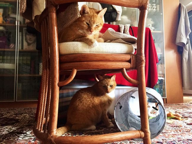 Cat Collection Cat Photography Something Special 3XPSUnity The Cat Condition From My Eyes To Yours The Cat Diaries Catch The Moment Two Cats Pets Cats Of EyeEm Cats 🐱 Enjoy The New Normal Cat Playground Cat Toys Cat #cute #love Cat Model Cat Moment Katzen 💜 Catlifestyle