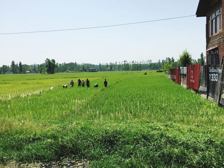 Farmers Field Miles Away Outdoors Sky Riceplantation House Wires Summer Day People Landscape Eye4photography  ShotOniPhone6 Kashmir , India Kashmirdiaries Kashmirphotographers The Great Outdoors - 2017 EyeEm Awards Mix Yourself A Good Time The Week On EyeEm Been There. Lost In The Landscape Perspectives On Nature Be. Ready. Adventures In The City