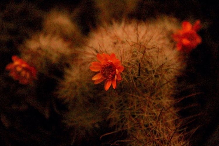 EyeEmNewHere Cactus Flower Nature