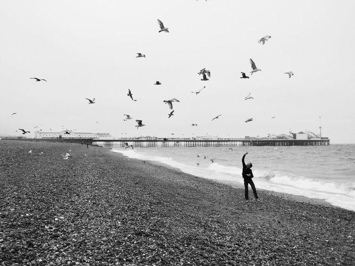 Feeding seaguls Samsung Galaxy Zoom Galaxyzoom Brighton Beach