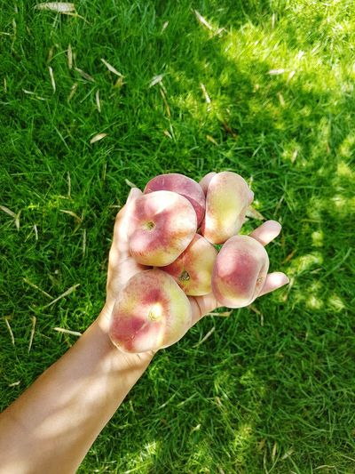 The Week on EyeEm Picoftheday Photooftheday Pictureoftheday Fruits Fruits Fruits Peaches Peaches🍑 Peaches Human Hand Low Section Human Leg High Angle View Field Personal Perspective Human Foot Unrecognizable Person Close-up Grass