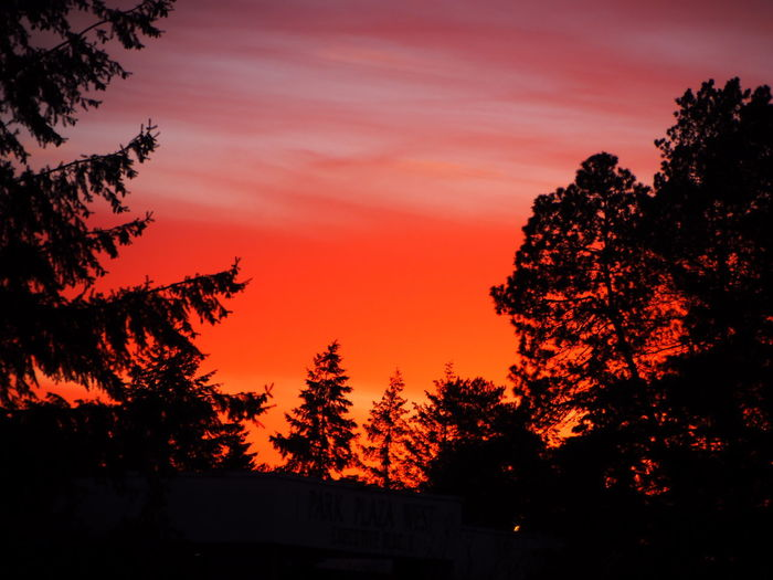 Beauty In Nature Nature Nature And Orange Sky Orange And Red Sunset Orange Color Red And Black Colour Red Sun At Night Silouette And Shadows Sky Sun Set And Trees Sunset The City Light Tree Trees And Sky