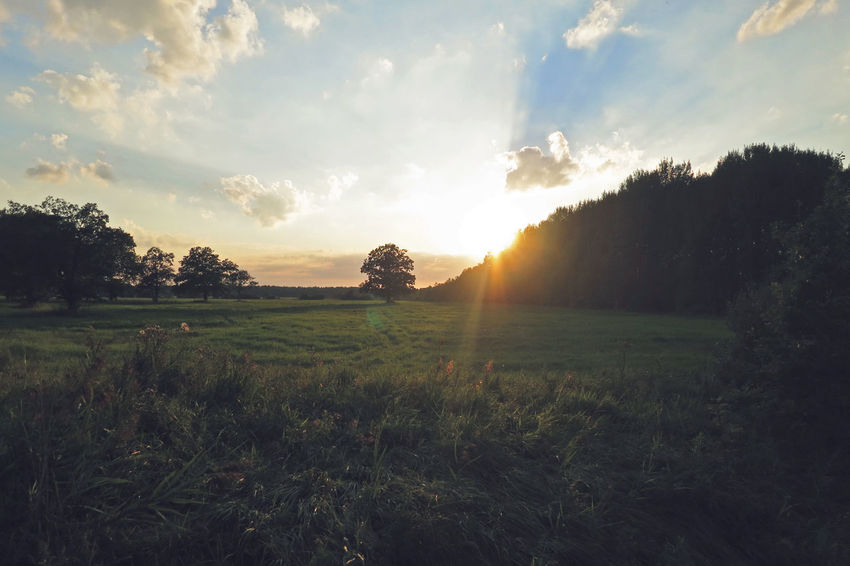 Beauty In Nature Cloud - Sky EyeEm Gallery EyeEm Nature Lover Field Green Color Landscape Lens Flare Naturaleza Nature Rural Rural Landscape Rural Scene Rural Scenes Saaremaa Saaremaa Island Sunbeam Sunset Tranquil Scene Tranquilidad Tranquility Tranquility Tranquility Scene Tree árbol