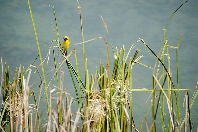 Yellow bird on