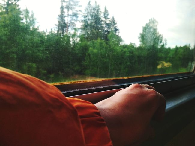 Tree Human Hand Red Windshield Land Vehicle Window Close-up