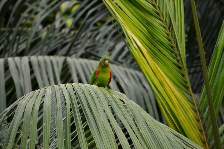 Maritaca observando. Bird Bird Photography Leaf Close-up Plant Green Color
