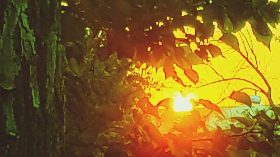 Sunseet Sunseet