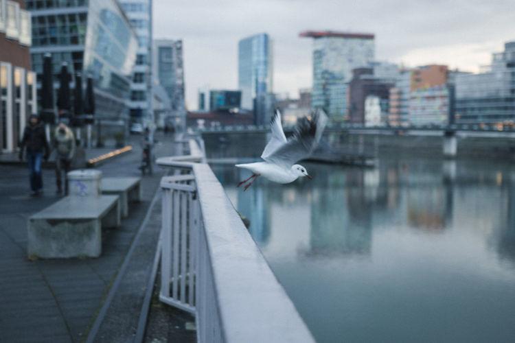City portrait i
