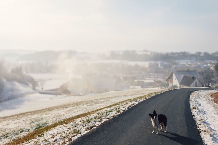 Dog standing on road against sky