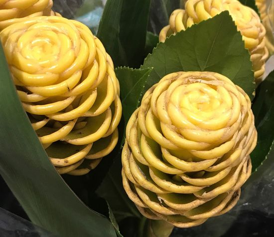 maracas! , actually is their real name of this tropical flower!! Freshness Flowers Leaf Nature Green Color Nature Exotic No Smell Decorative Flowers Amazing Shapes