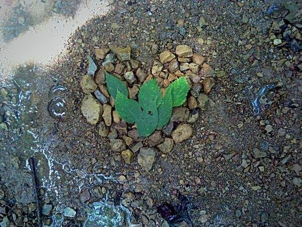 Love for Earth 🌿♥ Creekside Woods Water And Rocks Water And Nature Leaf Stones Water Love Nature Nature Lover Belief Gift Of Nature Magic Forest Forest Rituals