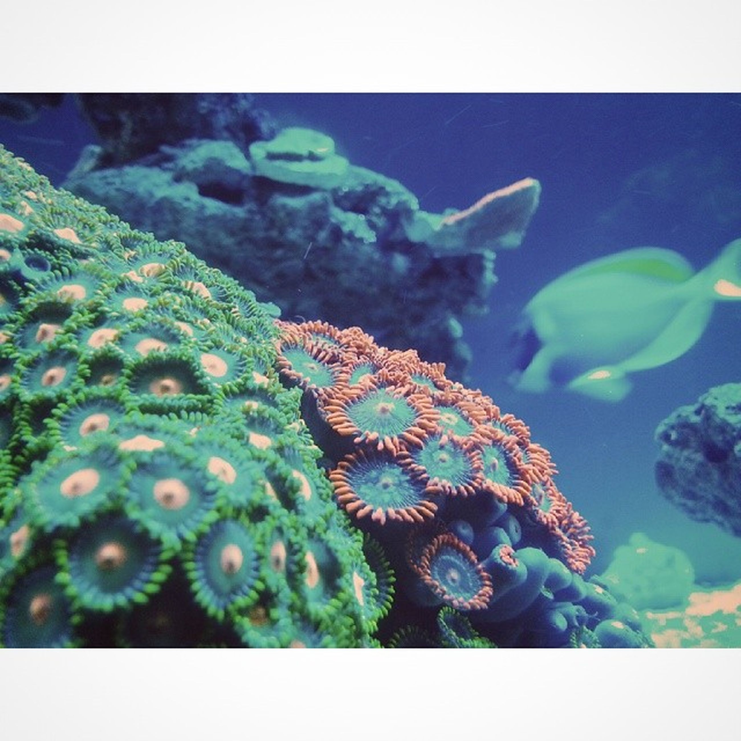 transfer print, animal themes, auto post production filter, animals in the wild, wildlife, one animal, flower, close-up, beauty in nature, nature, underwater, plant, growth, fragility, sea life, blue, no people, focus on foreground, water, undersea