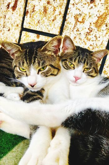 Cat Brothers Cats 🐱 Cats Cat Pets Feline Animal Themes Animal Domestic Cat Domestic Animals Looking At Camera High Angle View Furniture Portrait