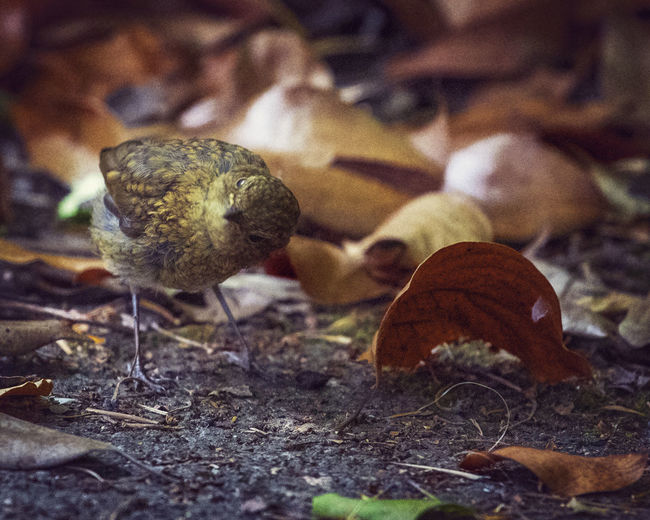 Turn over a new leaf Plant Part Leaf Close-up Food Dry Land No People Selective Focus Food And Drink Nature Field Day Plant Mushroom Brown Growth Focus On Foreground Fungus Autumn Vegetable Outdoors Change Toadstool Leaves Bird