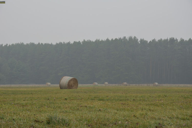 Bales of straw in the field on a foggy day in the autumn season Foggy Foggy Day Autumn Straw Bale Of Straw Plant Field Landscape Land Grass Environment Tree Bale  Nature Tranquil Scene Beauty In Nature Agriculture Scenics - Nature Sky Tranquility Green Color Day Rural Scene No People Farm Outdoors EyeEmNewHere