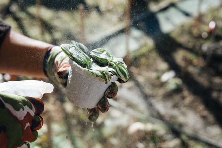 Cropped image of man spraying water on plant