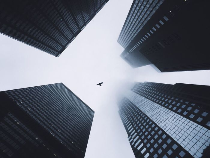 Low angle view of bird flying amidst building in city against sky