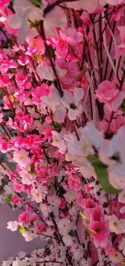 Tree Flower Flower Head Branch Leaf Springtime Backgrounds Pink Color Natural Parkland Blossom