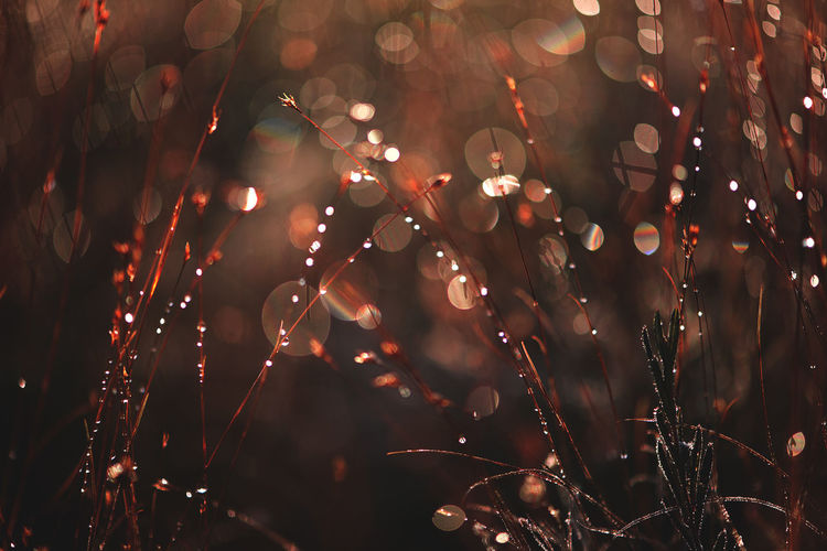ArtWork Autumn Earth Nature Art Artworks Beauty In Nature Beauty In Nature Bokeh Close-up Defocused Drop Earth Tones Fall Fragility Freshness Growth Landscape Macro Fantasy Nature Night No People Outdoors Water Wet Perspectives On Nature Shades Of Winter