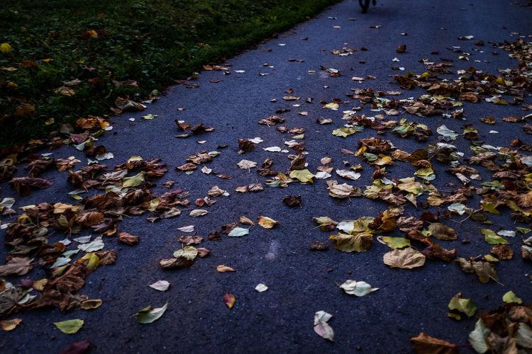 Plant Part Leaf Change Autumn High Angle View Day Nature Street Falling Dry Leaves Road Plant No People Beauty In Nature Footpath City Transportation Outdoors Fragility Messy Maple Leaf