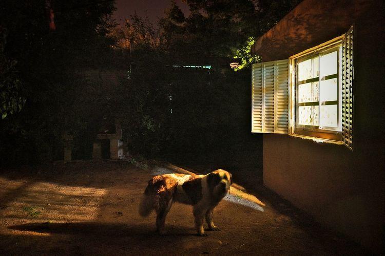 Dog outside of house